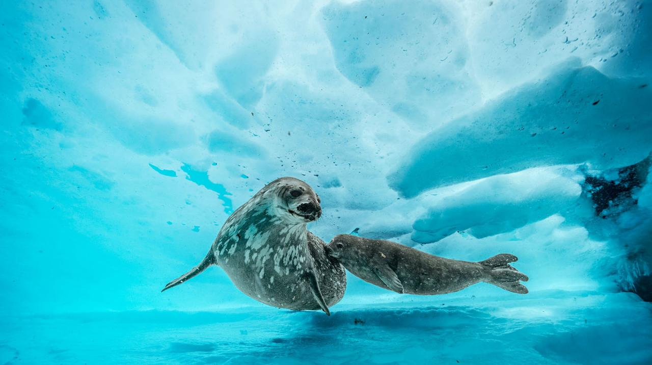 Blancpain Laurent Ballesta Wildlife Photographer Prize